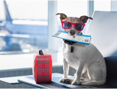 Plan a Pet-Friendly Vacation By Following These 6 Tips for Traveling With a Pet